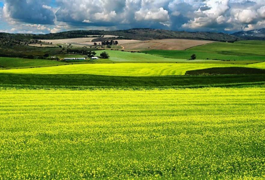Земли сельхоз назначения Разве